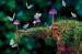 Τό φαινόμενο τῆς πεταλούδας καί ἡ πανδημία τοῦ κορωνοϊοῦ